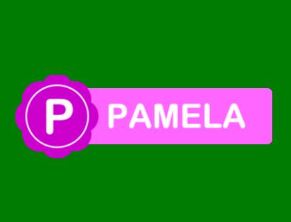 Pamela For Skype